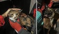 Enkaz Altındaki Kedi, Yaklaşık 30 Saat Sonra K-9 Köpeği Tarafından Kurtarıldı