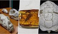 Bir Müzeyi Doldurur: Adnan Oktar'ın Evinden Çıkan Fosiller 417 Milyon Yıl Önceye Gidiyor