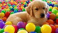 Seçtiğin Köpeklere Göre Hangi Emojisin?