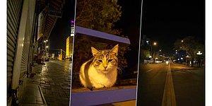 Türkiye Geneli Sokağa Çıkma Yasağı Başladı: Sokaklar Sokak Hayvanlarına Kaldı