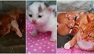 İnternetini Yeni Bağlatanlar İçin: Atölyede Baktığı Kedi Doğum Yapınca Mutluluktan Kendinden Geçen Osman Abi