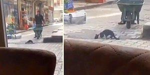 Su İçen Kediyi Rahatsız Edip Kaçırmamak İçin Bekleyen Güzel İnsan