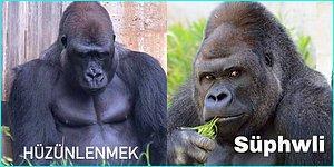 Sosyal Medyanın Her Köşesinde Karşımıza Çıkan Bir Garip Goril Akımından Tüm Ruh Hallerimizi Yansıtacak Paylaşımlar