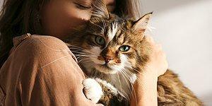 Kedi Alerjenleri Hakkında Gerçekten Ne Kadar Bilgilisin?