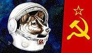 Soğuk Savaşın En Sıcak Kanlı Karakteri, Sovyet Uzay Köpeği: Laika
