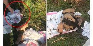 Ölmek Üzerelerdi: Çuvalın İçine Konulan 12 Yavru Köpeği Hayvanseverler Kurtardı