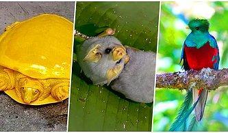 Daha Önce Hiçbir Yerde Görmediğiniz Başka Bir Gezegenden Fırlamış Gibi Gözüken 18 Alışılmadık Hayvan