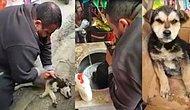 Yemek Yediği Sırada Fenalaşan Köpeği Suni Teneffüs Yaparak Hayata Döndüren Güzel İnsan