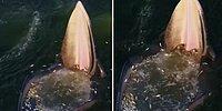 Ağzını Açık Tutarak Avlanan Balinadan Bir Değişik Avlanma Şekli