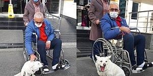 Hastanenin Kapısında Beklediği İnsan Dostu Cemal Şentürk Taburcu Olunca Mutluluktan Havalara Uçan Köpek