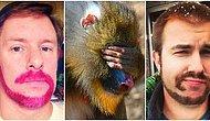 Bu Trend İşleri Beylere Yaramıyor: Erkekler İçin Son Sakal Tıraşı Trendi Maymun Kuyruğu