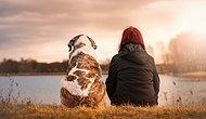 Köpeklerin İlk Kez Ne Zaman ve Nerede Evcilleştirildiği Bulundu
