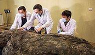 Nesli 14 Bin Yıl Önce Tükenmişti: Sibirya'da Heyecanlandıran Keşif