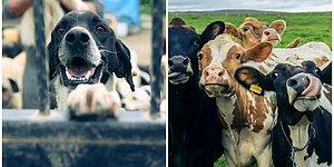 Umut Kısa Yazio: Neden Adil ve Etik Bir Hayvan Hakları Yasası Çıkamaz?