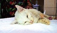 Kaldırımda Ölmek Üzereyken Bulundu: Tüfekle Vurulan Kedi Yaşam Mücadelesi Veriyor