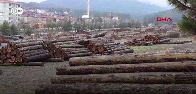 Peki bu tesisler için neden ormanlar tercih ediliyor?