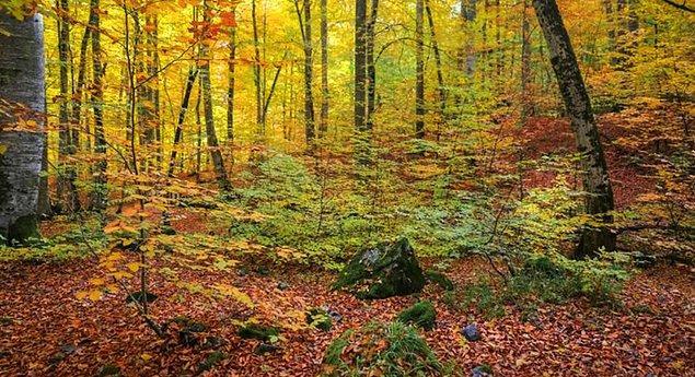 Farklı alanlar için orman alanlarına verilen izin 738 bin hektarı buldu