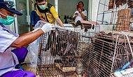 Wuhan'da İnceleme Yapan DSÖ Yetkilisi: 'Canlı Hayvan Pazarında Önemli İpuçları Bulduk'