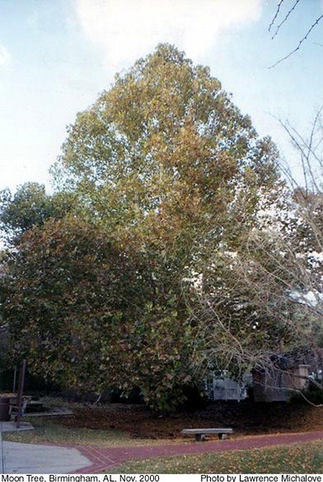 Ağaçların üçte biri öldü