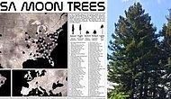 Üçte Biri Ölmüş: NASA, 50 Yılın Ardından Ay Ağaçlarının Haritasını Yayınladı