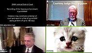 Filtre Açık Kalırsa... Avukat Duruşmaya Kedi Olarak Katıldı