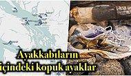 21.Yüzyılın En Gizemli Olayı: Salish Denizinde Ayakkabılar İçinde Kıyıya Vuran Kopuk Ayakların Sırrı