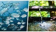 Neden Deniz Suyundaki Tuzu Ayrıştırıp İçme Suyu Olarak Kullanmıyoruz?