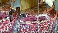 Namaz Kılan İnsan Dostunu Bir Türlü Rahat Bırakmayan Yavru Kedi