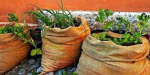 Evde Kendi İmkanlarıyla Tarım Yapmak İsteyenlere Yemyeşil Tavsiyeler