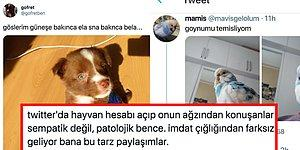 Eğlenceli mi İtici mi? Evcil Hayvanları Bozuk Türkçe İle Konuşturan Sosyal Medya Hesapları Tartışılıyor