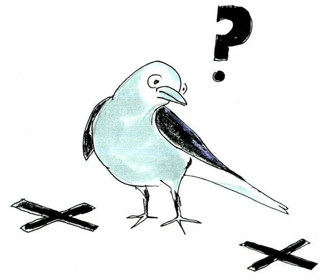 4. Fındıkkıran kuşları, göç sırasında sakladıkları erzaklarının yerlerini tekrar aynı bölgeden geçerken hatırlayabiliyor ve böylece rahat bir şekilde besleniyor.