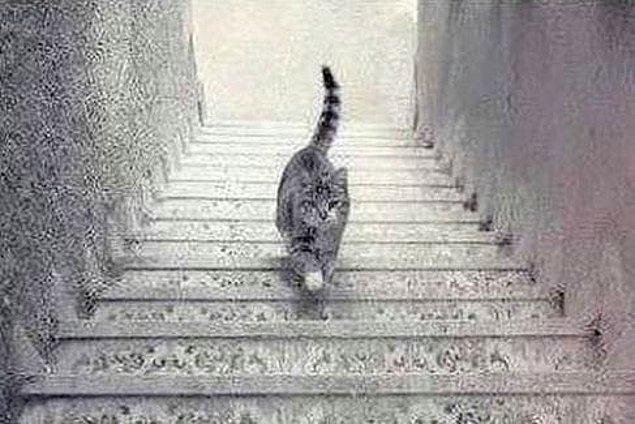 4. Kedi merdivenlerden iniyor mu yoksa merdivenleri çıkıyor mu?