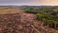 Amazon Ormanlarının Çevreye Zararı, Faydasını Geçti
