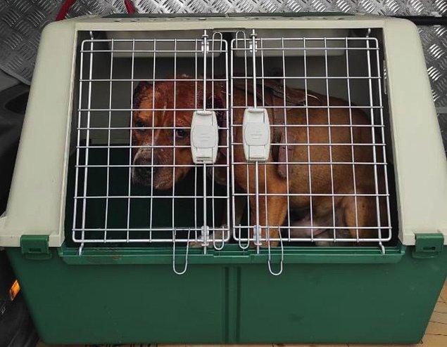 S.Ö.'ye 5199 Hayvanları Koruma Kanunu kapsamında işlem yapılarak 11 bin 500 TL para cezası kesildi.