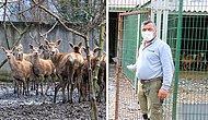Hayvanat  Bahçesindeki Geyiği Kaçırıp Yemişlerdi: Olayın Ayrıntıları Ortaya Çıktı