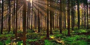 Türkiye'de En Çok Ormanlık Alana Sahip Olan Şehrimizi Bulabilecek misin?