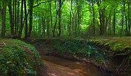 Hem Doğa Harikası Hem Önemli Bir Oksijen Kaynağı: Yeşilin Her Tonunun Buluştuğu Türkiye'deki Longoz Ormanları
