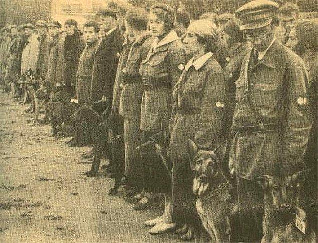 """2. 2. Dünya Savaşı'nda Ruslar, düşman tanklarının altına girip saatli bomba bırakabilmesi için köpekleri eğitmişlerdi ve onlara """"tanksavar köpekler"""" denildi."""