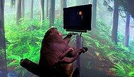 Elon Musk'ın Çılgın Projesi: Beyin Çipi Takılı Maymun, Zihin Gücüyle Video Oyunu Oynadı