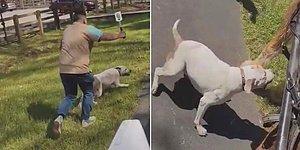 İnsan Dostunun Elinden Kaçan Pitbull, Fayton Çeken Ata Saldırdı