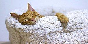 Kilo Vermenin En Güzel Hali: Uyurken Daha Fazla Kilo Vermenizi Sağlayacak Birbirinden Etkili 13 Yol