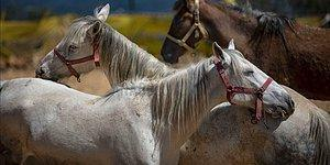 Türkiye '128 Milyar Doları' Ararken İBB'nin Hibe Ettiği Atlar da 'Kayboldu'