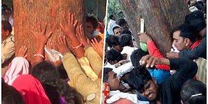 Hindular Tarafından İyileştirici Olduğuna İnanılan Mahua Ağacı