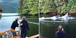Kanada'da İnsanların Çok Yakınına Gelen Balinaların Büyüleyici Görüntüleri