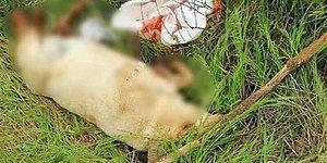 Bir Hayvana Şiddet Olayı Daha: Ayakları, Kuyruğu ve Boynu Kesilmiş