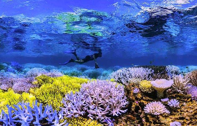 12. Chasing Coral