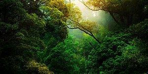 Nefes Almak İçin Onları Korumak Zorundayız! Dünyamızın Akciğerleri Olan 10 Orman