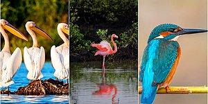 Hepsi Büyüleyici: Göç Eden Kuşların Nesillerinin Devamı İçin Büyük Önem Taşıyan Ülkemizdeki Kuş Cennetleri
