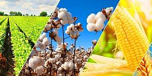 Hangi Tarım Ürününü Yetiştirmelisin?