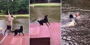 İnsan Dostları Suya Düşen Köpeklerden Kalbinizi Bırakacağınız Kurtarma Operasyonu